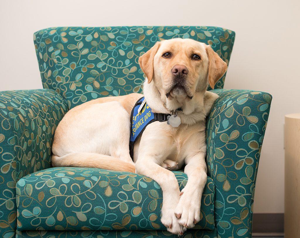 Dorado, Accredited Facility Dog